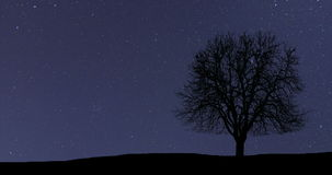 Lapso de tiempo hermoso de la astronomía Árbol solo de la vía láctea almacen de video