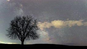 Lapso de tiempo hermoso de la astronomía Árbol solo de la vía láctea almacen de metraje de vídeo