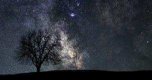 Lapso de tiempo hermoso de la astronomía Lapso de tiempo de la vía láctea Árbol solo almacen de video