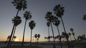 lapso de tiempo 4k de palmeras cerca del océano en Venice Beach metrajes