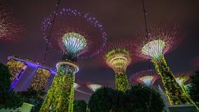 Lapso de tiempo de la arboleda de Supertree Singapur Supertrees iluminado en la noche metrajes