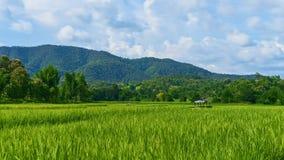Lapso de tiempo poca choza en el campo del arroz metrajes