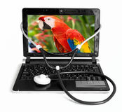 The laptop Stock Photos