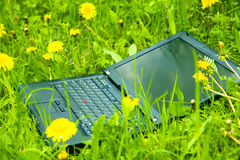 Laptop. In grass with dandelions Stock Photo