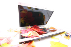 Laptop. Notebook with leaf in summer time Royalty Free Stock Photography