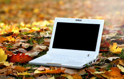 Laptop in an automn scene Royalty Free Stock Photos