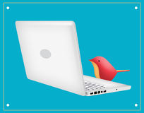Laptop Bird. Laptop with red bird looking at screen Stock Photography