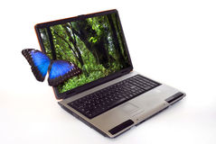 Laptop with butterfly Royalty Free Stock Photography