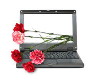 Laptop with carnations bouquet Stock Photos