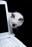 Laptop cat Stock Images