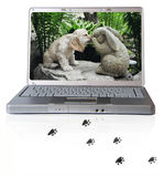Laptop with cocker spaniel on screen. Laptop with American Cocker Spaniel and pawprints royalty free stock photo
