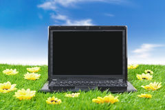 Laptop computer surrounded by sunflowers Royalty Free Stock Image
