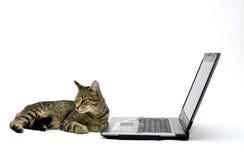 LAPTOP-COMPUTER und Katze Stockbilder