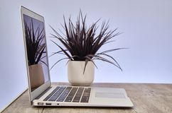 Laptop Computer Royalty Free Stock Images