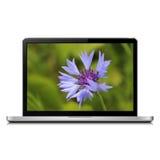 Laptop with cornflower on screen Stock Photo