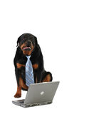 Laptop and dog. Business dog, internet security concept, isolated on white Stock Image