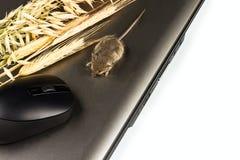 Laptop, Eingabeeinheit, Maus und Ährchen von Getreide Stockfoto