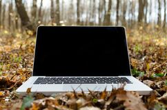 Laptop in forest foliage Stock Photos