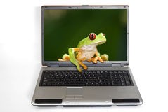 Laptop with frog getting out Royalty Free Stock Photo