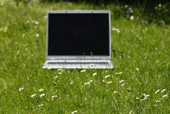 Laptop on green grass. Focus on grass, laptop soft focus Royalty Free Stock Photo