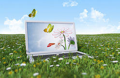 Laptop on the green grass. Field Royalty Free Stock Image