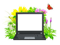 Laptop and green leaves Stock Photos