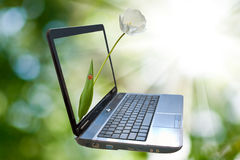 Laptop image on a green background. Stock Photos