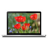 Laptop isolated on white with tulip flowers on screen Stock Images