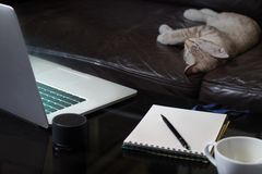 Laptop notebook with coffee cup and kitten sleeping royalty free stock images