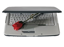 Laptop and red rose. Modern laptop with red rose, isolated white Royalty Free Stock Image