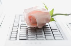 Laptop and Rose Royalty Free Stock Photos