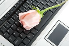 Laptop and Rose Stock Photography