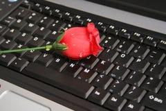 laptop rose Obrazy Royalty Free