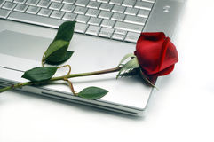 Laptop and Rose. In white background Royalty Free Stock Photography