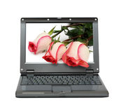 Laptop with roses bouquet Royalty Free Stock Image