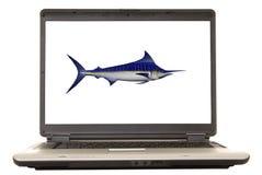 Laptop-Speerfisch Stockbilder
