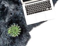 Laptop succulent plant fur background Flat lay social media. Laptop, succulent plant, fur background. Flat lay social media royalty free stock images