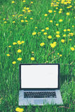 Laptop in summer grass field Royalty Free Stock Photography