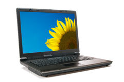 Laptop and sunflower Stock Photo