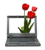 Laptop with tulips bouquet Royalty Free Stock Image