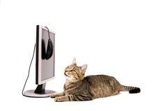 Laptop und Katze Stockfotos