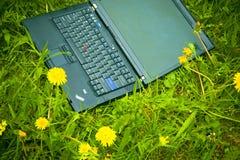 Laptop und Löwenzahn Stockbild