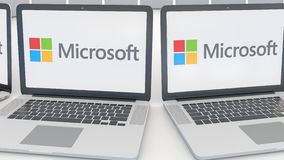 Laptops with Microsoft logo on the screen. Computer technology conceptual editorial 4K clip, seamless loop
