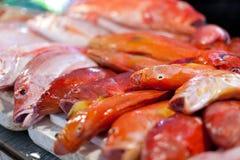 Lapu-lapu, röda snapper och tonfisk, skaldjur på marknad Arkivfoton