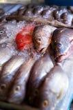 Lapu-lapu, röda snapper och tonfisk, skaldjur på marknad Royaltyfri Fotografi