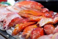 Lapu-lapu, red snapper and tuna, seafood on market Stock Photo