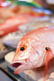 Lapu-lapu, red snapper and tuna, seafood on market Royalty Free Stock Photography