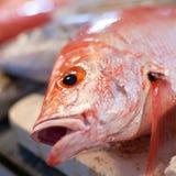 Lapu-Lapu, rode snapper en tonijn, zeevruchten op markt Stock Afbeelding