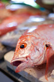 Lapu-Lapu, rode snapper en tonijn, zeevruchten op markt Stock Foto's