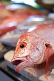 Lapu-lapu, Schnapper und Thunfisch, Meeresfrüchte auf Markt Stockfotos